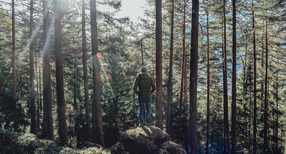 A man stands solo on a rock in the in the woods.